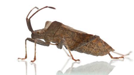 You were my bug killer...