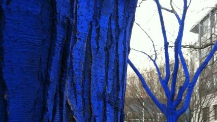 Stop and Smell the Blue Trees: Wordless Wednesday