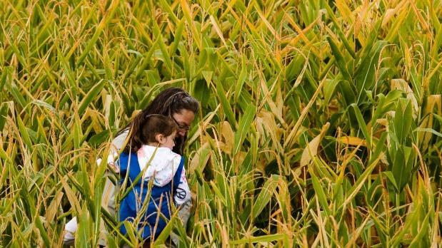 When Life Turns Into a Corn Maze, What Do You Do?