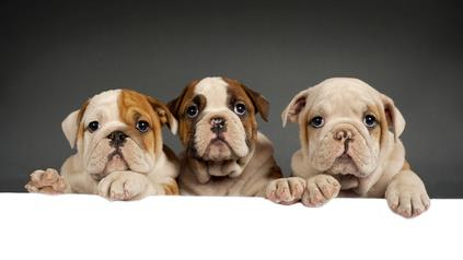 Pets And Divorce: Who Gets Custody of Fido?